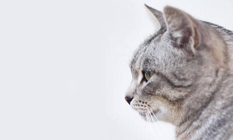 kitty cat head gray profile